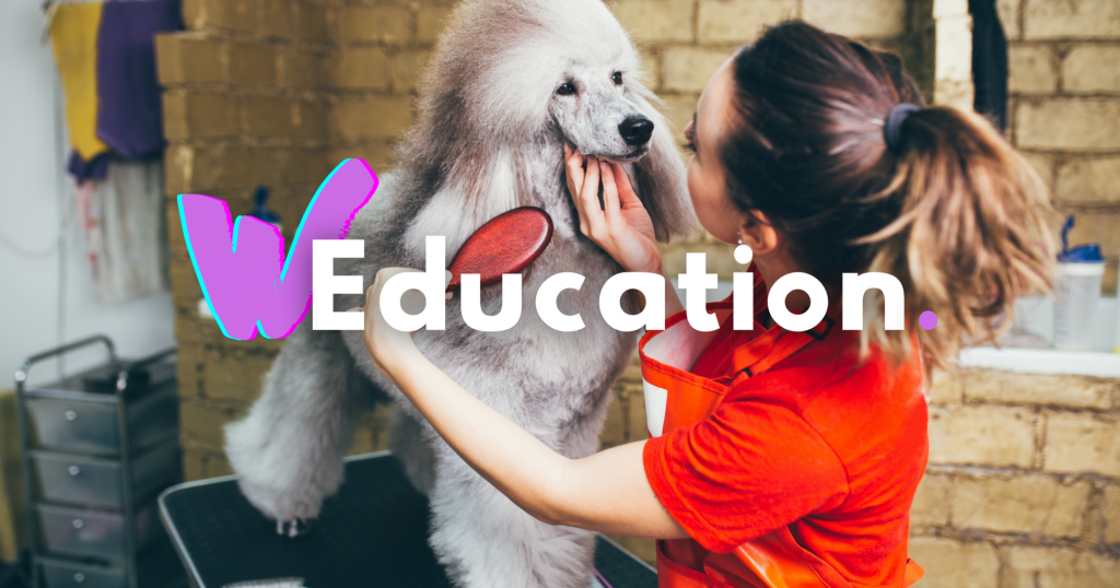 Whippet Education - The Whippet Media
