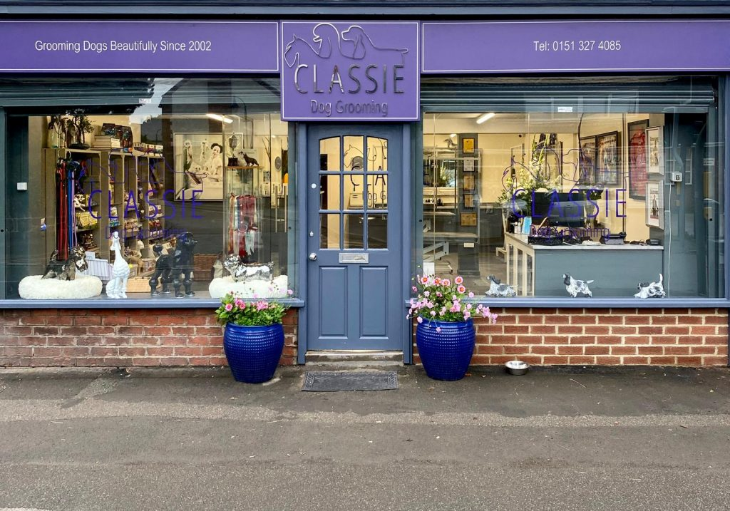 Classie grooming. Whippet Media. Salon of the month