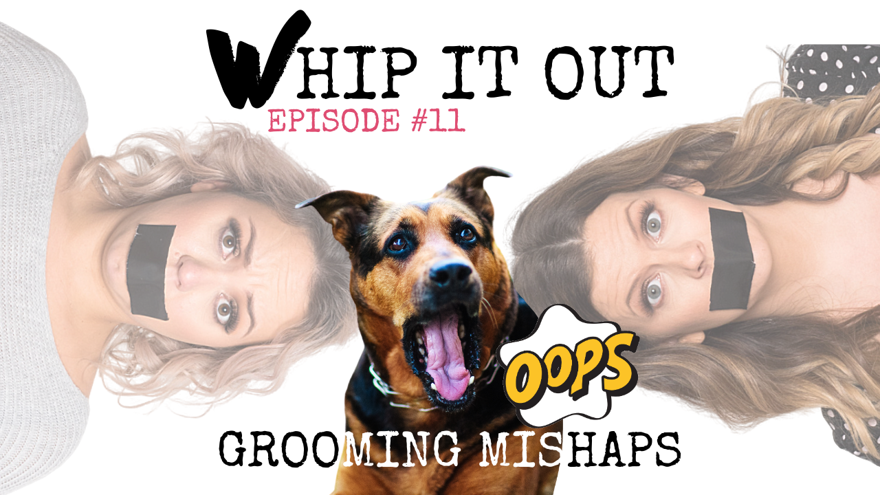 Whip it out. episode 11. Whippet media