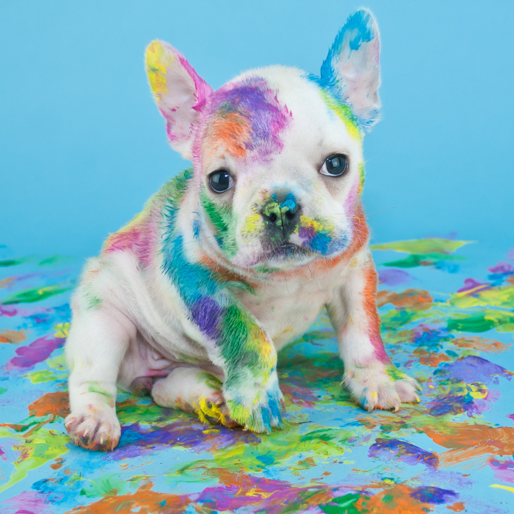 puppy covered in paint. Creative grooming