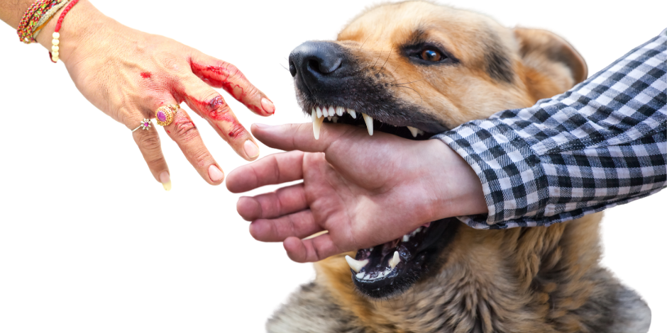 German Shepherd bites hand