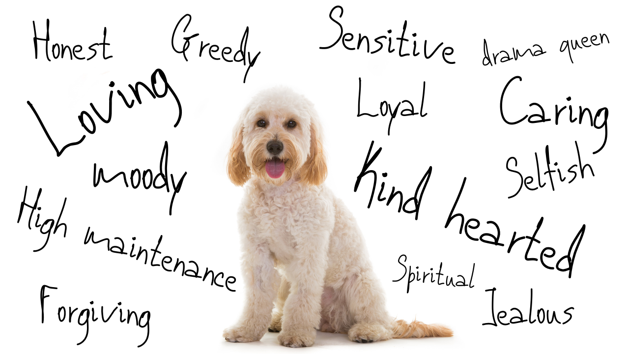 Dog and personality traits. THE WHIPPET MEDIA