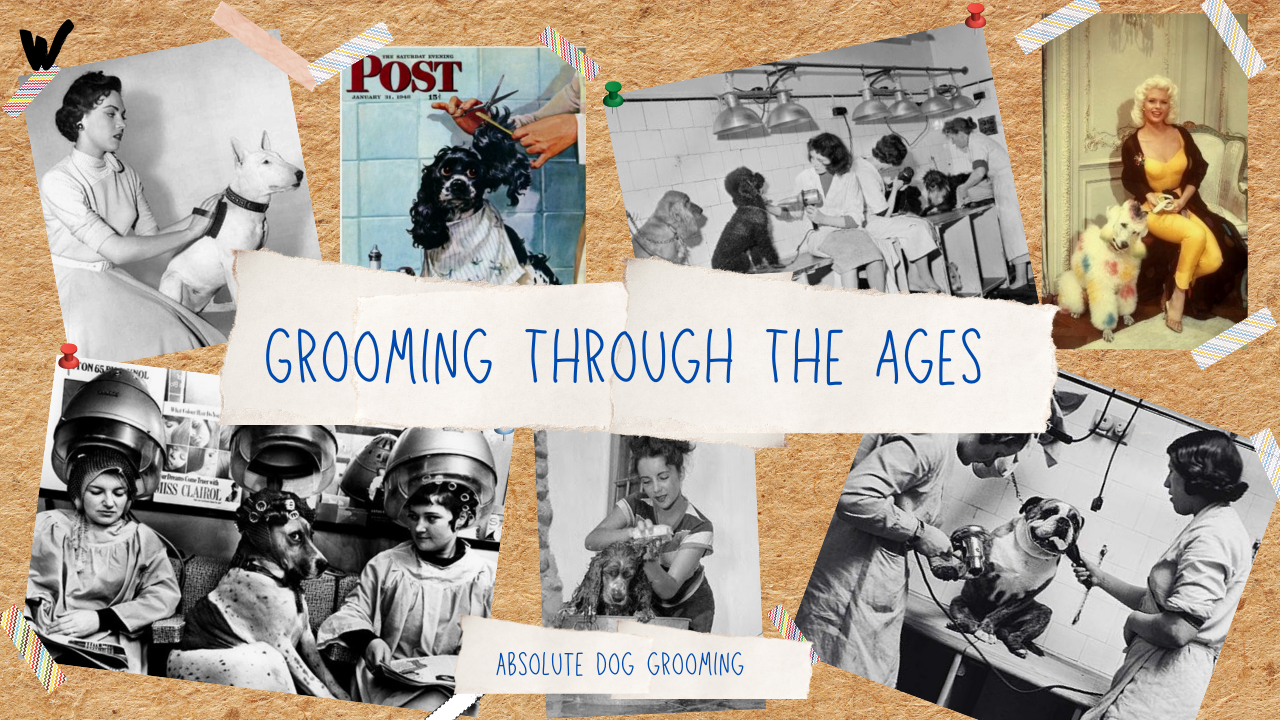 grooming through the ages home screen whippet media