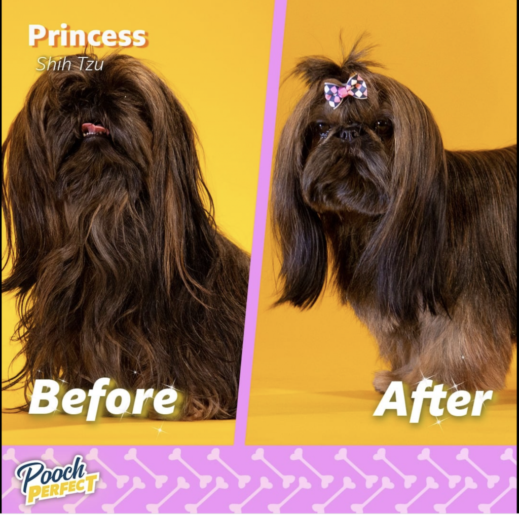 Pooch perfect transformations.